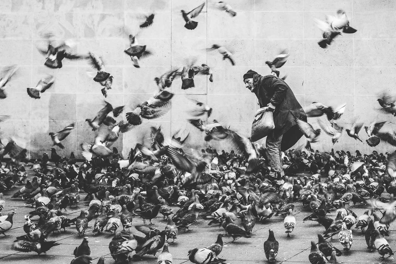 paris-birds